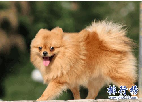 狗价格排名_世界十大可爱温顺狗狗排名,聪明温顺适合家养的狗有哪些?_宠物 ...