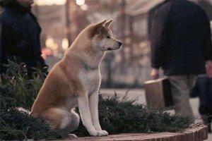 十大感人的狗狗题材电影,第一部看几次都催人泪下!