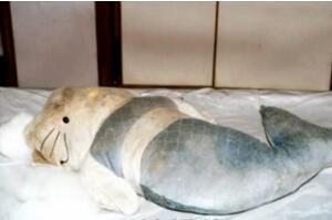 香港十大奇案之一:HelloKitty藏尸案,肢解头颅装入娃娃(图片)