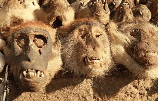 世界十大最恐怖的地方8、多哥的巫术广场