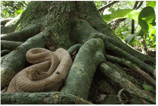 世界十大最恐怖的地方7、巴西蛇岛