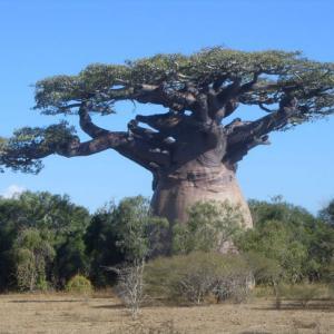 世界上最无奈的树,被当地人改成了酒吧