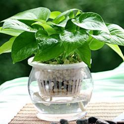 家中养什么植物好?最适合家养的十种植物排行