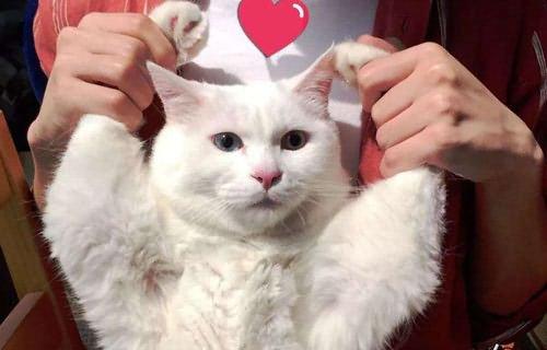 长耳朵短尾巴的狗_世界十大最奇特的猫排行,这些猫咪长的真奇怪_宠物_第一排行榜